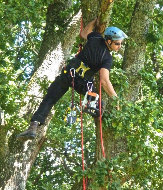 Pascal raimbault il passe ses journes dans les arbres for Arbre sans entretien
