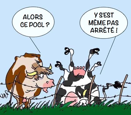 Pocl-vaches
