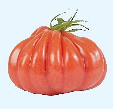 tomate-aumoniere-bleu